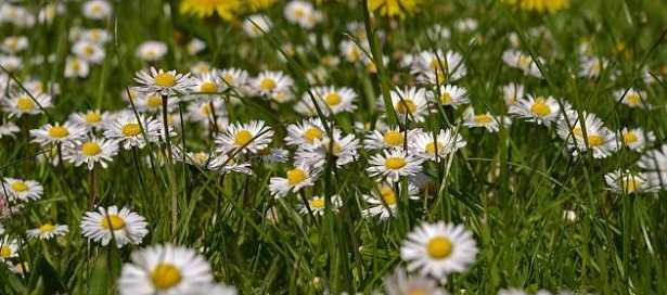 equinozio-di-primavera-3